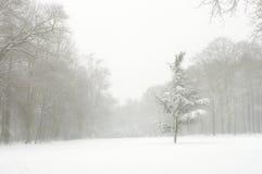 White blizzard Stock Image