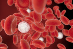 White blood cells in blood stream Royalty Free Stock Photo