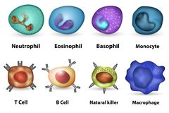 White blood cells overview Royalty Free Stock Photo