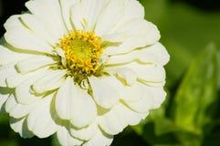 White bloom Stock Photo