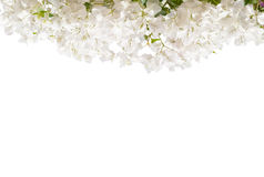 White blooming Bougainvillea. Royalty Free Stock Photos