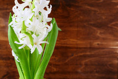 White blooming hyacinth flowers Stock Photo