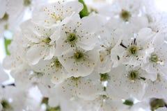 Free public domain cc0 image white blossom flower spring picture white blossom flower spring stock photo mightylinksfo