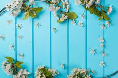 White blossom flowers on blue wooden backgrounds. royalty free stock photos