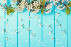 White blossom flowers on blue wooden backgrounds. royalty free stock photo