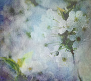 White blossom on old paper Royalty Free Stock Photos