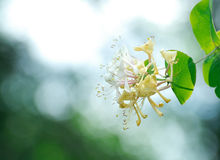 White blossom over greens. Stock Photography