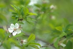 White blossoming flower on blurred background of green leaves.  royalty free stock images