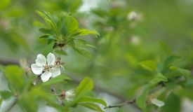 White blossoming flower on blurred background of green leaves.  stock photo