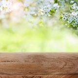 White blossoms in a garden with wooden table. For a easter decoration stock photos