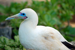 White blue Crane Bird Royalty Free Stock Photos