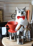 White blue-eyed cat barista in red bow tie. Alternative coffee brewing. Pack with empty label, space for design or text. White blue-eyed cat barista in a red bow Royalty Free Stock Photo