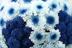 White and blue flower background Royalty Free Stock Images
