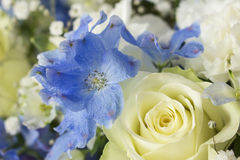 White and blue flower bouquet Royalty Free Stock Photos