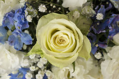 White and blue flower bouquet Stock Images