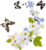 White and blue flower branches with butterflies Royalty Free Stock Images