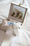 White and Blue Garter. Senting in a Mirrored box Stock Photos