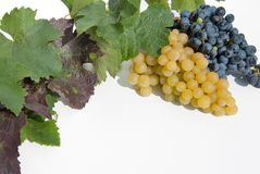 White and blue grapes. Royalty Free Stock Photography