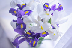 White and blue irises. Delicate petals of white and blue irises Royalty Free Stock Photography