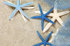 White and blue sea stars Royalty Free Stock Images
