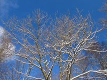 White blue winter Royalty Free Stock Images