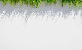 White blur background with grass and shadow above Royalty Free Stock Photos