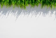 White blur background with grass and shadow Royalty Free Stock Image