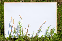 White board in grassy place Stock Photo