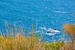 White boat on a blue sea. And yellow grass Stock Images