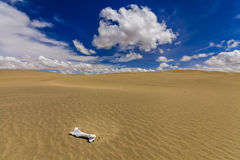 White bone on the sand in the Gobi Desert. Royalty Free Stock Images