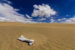 White bone on the sand in the Gobi Desert. Mongolia Stock Image