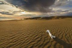 White bone on the sand in the Gobi Desert. Stock Photo