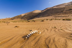 White bones in the desert Stock Photo