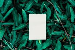 White book with green leaf. royalty free stock photo