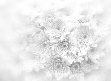 White bouquet background. Stock Photo