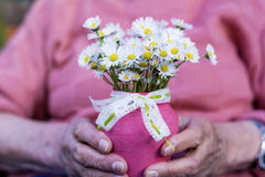 White bouquet of blooming daisies in senior woman's hands Stock Photos