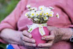White bouquet of blooming daisies in senior woman's hands Stock Image