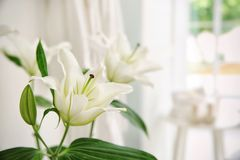 White bouquet of lilies. On blurred background Royalty Free Stock Photo