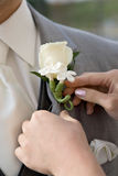 White Boutonnierre on Lapel Stock Image