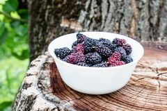 White bowl with delicious ripe juicy mulberry stands on the stump outdoors stock image