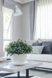 White bowl of plants on table in modern living room Royalty Free Stock Photography