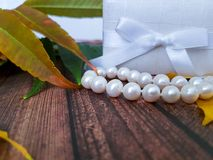 White box, bow, with pearl beads. White box bow with pearl beads on a wooden board leaves autumn Stock Photography