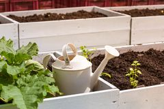 White boxes with beds for seedling, a white metal watering can and a plant of pumpkin in summer. White boxes with beds for seedling, a white metal watering can stock photos