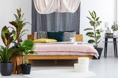 Drapes in cozy bedroom. White boxes on rug and plants near wooden bed with drapes in cozy bedroom interior with lamp on stool stock photography