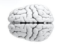 White brain. 3d render of brain on white background Royalty Free Stock Photography