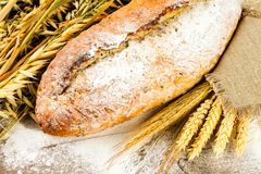 White bread with spikelets of wheat, oats and rye Royalty Free Stock Photo