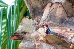 White-Breasted Kingfisher Royalty Free Stock Photos