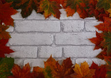 White brick background with maple leaf border Stock Photos