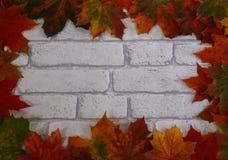 White brick background with maple leaf border Stock Photos