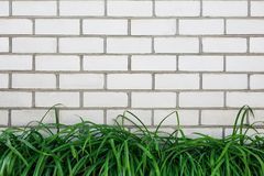 White brick wall with bright green grass outdoors in the park. Texture background. White brick wall with bright green grass outdoors in the park Stock Images